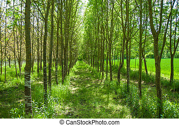 arbres, parc, vert, grand, coup, beau