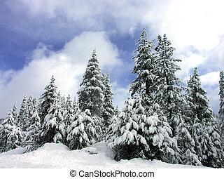 arbres pin, neige