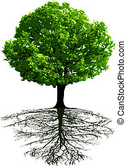 arbres, racines