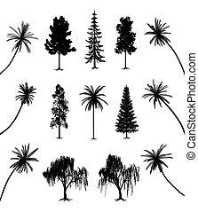 arbres, racines, paumes