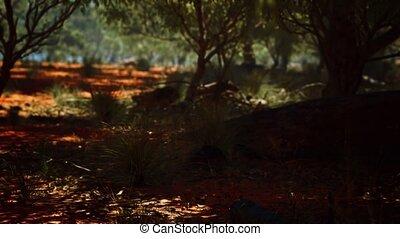 arbres, rouges, buisson, sable