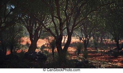 arbres, sable, rouges, buisson