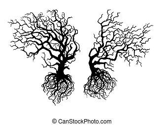 arbres, tordu, vieux