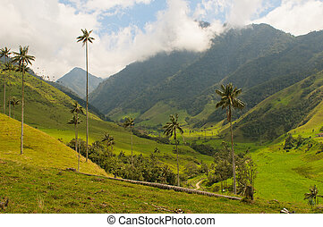 arbres, vax, paume, cocora, colombie, vallée