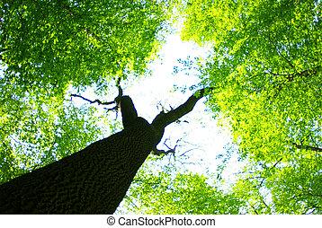 arbres verts
