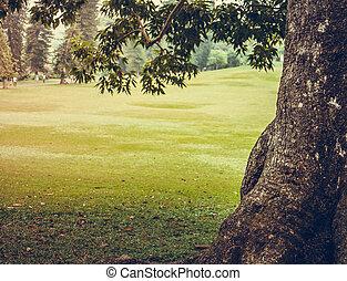 arbres., ville parc, vert