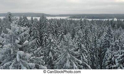 arbres, vue, forêt, hiver, sapin, snow., pin, paysage., naturel, collines, magique, aérien, couvert