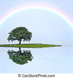 arc-en-ciel, arbre, chêne