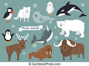 arctique, animaux, ensemble