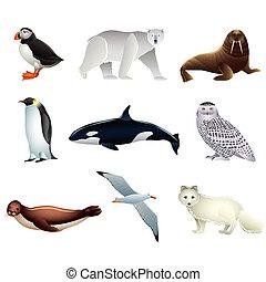arctique, vecteur, animaux, ensemble