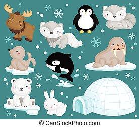 arctique, vecteur, ensemble, animal