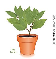 aromate, feuilles, argile, baie, pot fleurs