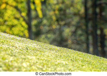 arrière-cour, herbe, vibrant, incliner, vert