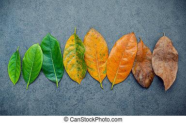 arrière-plan., arbre fruitier, saisonnier, âge, feuilles, copie, space., coloré, pierre, poser, plat, cric, différent, concept, sombre, vieillissant