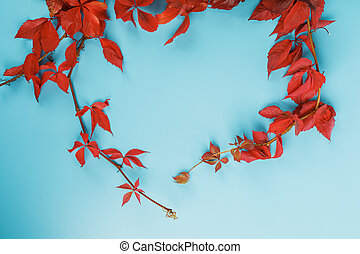 arrière-plan bleu, gratuite, lierre, feuilles automne, rouges, space.