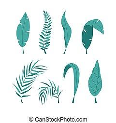 arrière-plan., ensemble, blanc, isolé, vecteur, feuilles