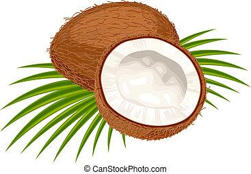arrière-plan., feuilles, noix coco, blanc