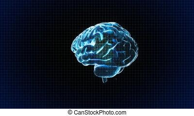 arrière-plan grille, cerveau, tourner