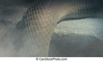 atmosphère, en mouvement, serpent, enfumé