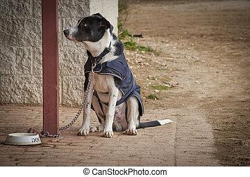 attente, adorable, séance, chien, manger