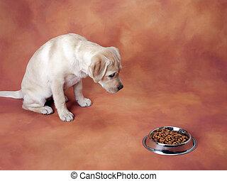 attente, chiot, manger