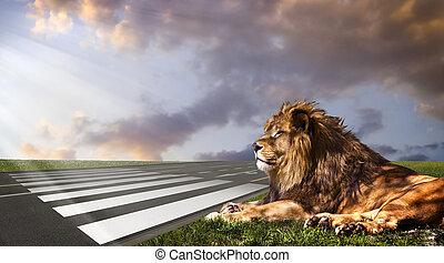 attente, sien, occasion, zebra