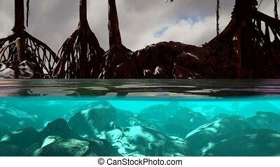 au-dessus, mangrove, surface, mer, arbres