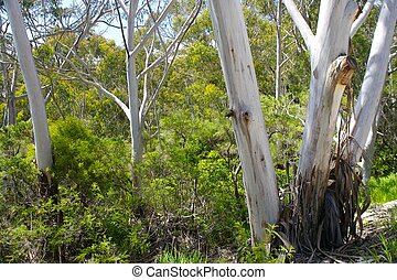 australien, buisson