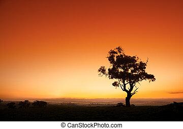 australien, levers de soleil