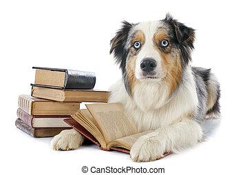 australien, livres, berger