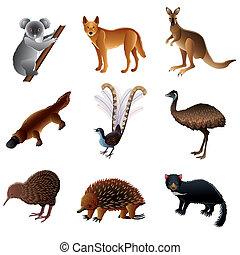 australien, vecteur, animaux, ensemble