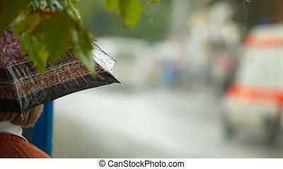 autobus, pluvieux, arrêt, jour