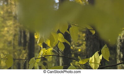 automne, 002, parc