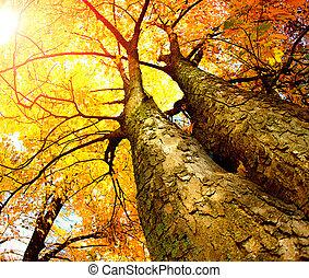 automne, arbres., automne