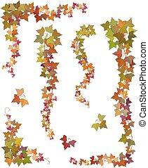 automne, branches, lierre, pendre