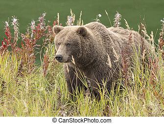 automne, brun, couleurs, ours