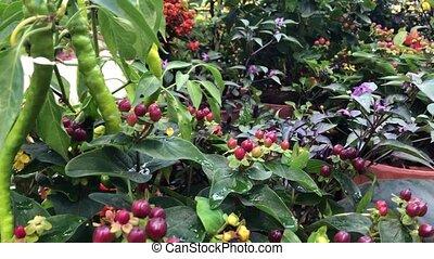 automne, composition, fleurs, usines