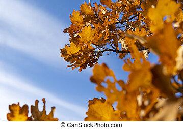automne, contre, lumière soleil, chêne, copie, jaune, espace, ciel bleu, feuilles