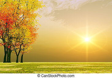 automne, coucher soleil