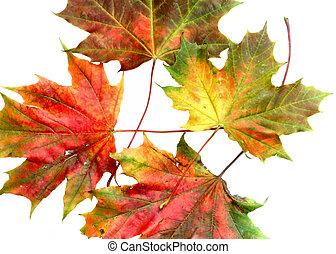 automne, couleurs, #10