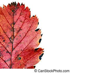 automne, couleurs, #11