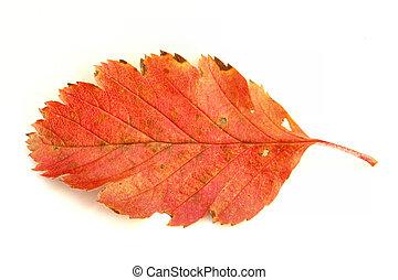 automne, couleurs, #4