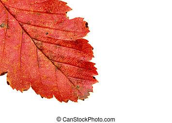automne, couleurs, #6