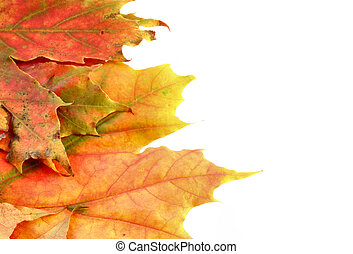 automne, couleurs, #7