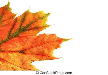 automne, couleurs, #8