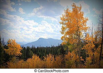 automne, couleurs, montana