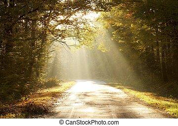 automne, enchanté, aube, forêt