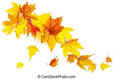 automne, feuilles chute