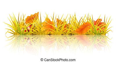 automne, herbe, 10eps
