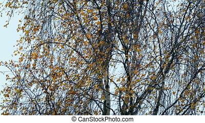 automne, jour arbre, vent